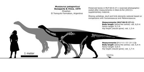 Mussaurus patagonicus schematic.