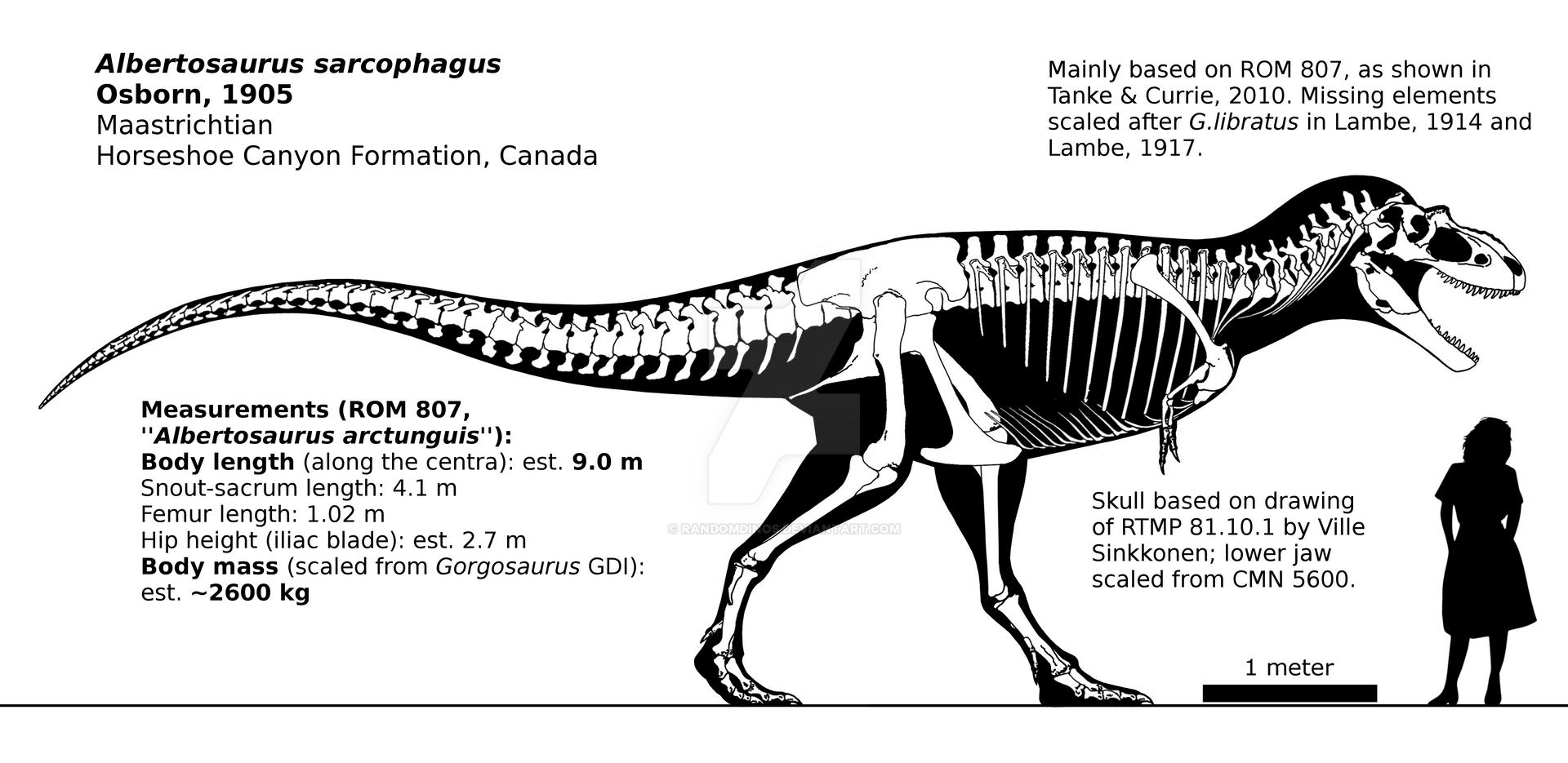 Albertosaurus sarcophagus skeletal reconstruction. by ...