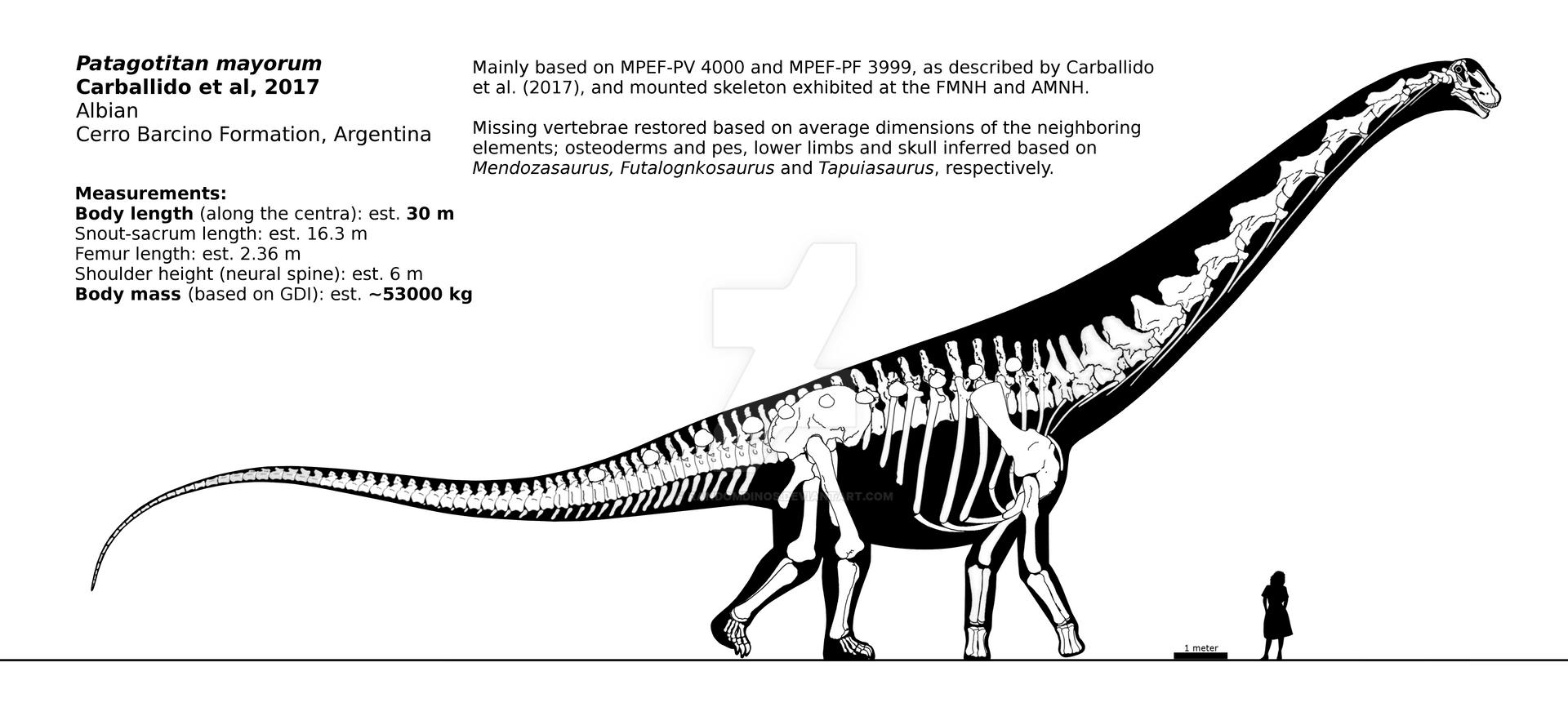 Patagotitan mayorum skeletal reconstruction. by randomdinos