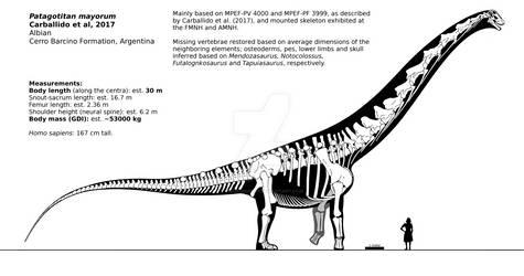 Patagotitan mayorum skeletal reconstruction.