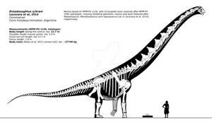 Dreadnoughtus schrani skeletal reconstruction.