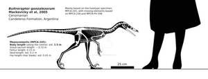Buitreraptor gonzalezorum skeletal reconstruction.