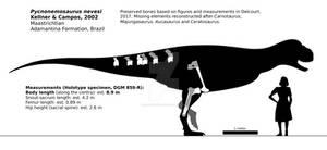 Pycnonemosaurus nevesi schematic.