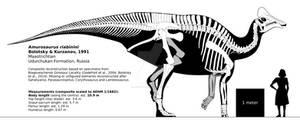 Amurosaurus riabinini skeletal reconstruction.