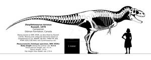Daspletosaurus torosus skeletal reconstruction.