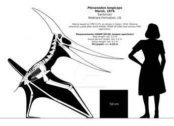 Pteranodon longiceps skeletal reconstruction.