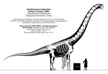 Huabeisaurus allocotus skeletal reconstruction.