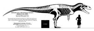 Torvosaurus tanneri skeletal reconstruction.