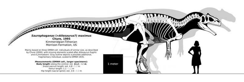 Saurophaganax maximus skeletal reconstruction.