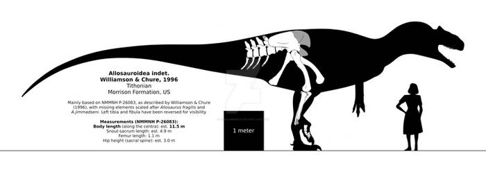 Allosauroidea indet. NMMNH P-26083 schematic.