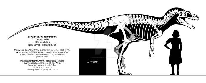 Dryptosaurus aquilunguis skeletal reconstruction.