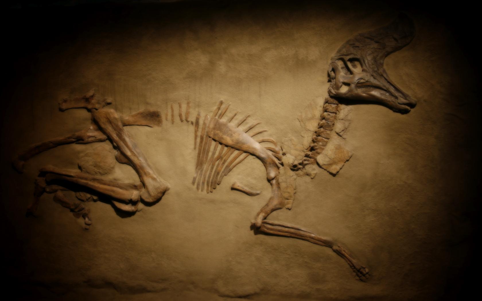 http://fc09.deviantart.net/fs32/f/2008/191/e/f/Dino_bones_wallpaper_by_devgear.jpg
