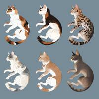 warm colored cats adopts by DarianYunidi