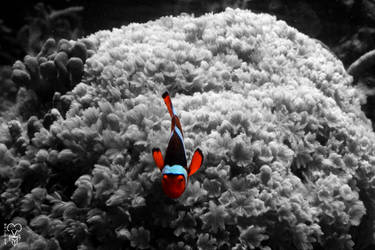 Clown Fish 1 by Kiara-Vestigium