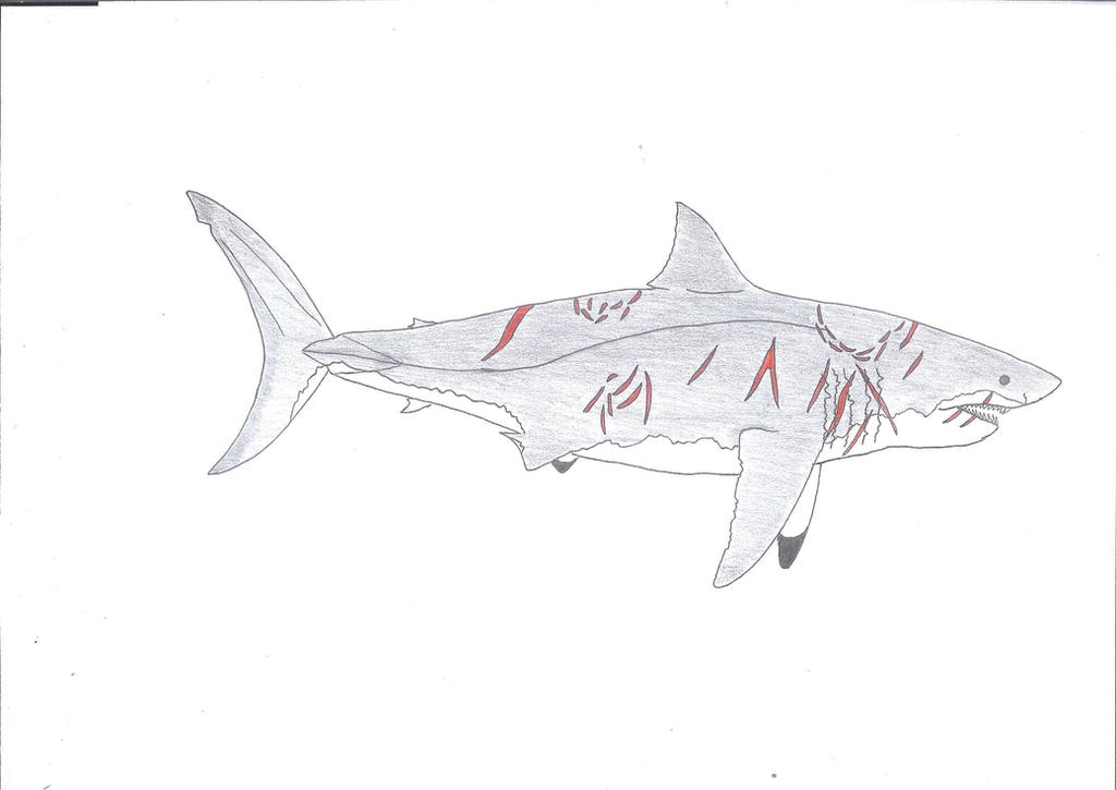 Image Result For Sharks Coloring Pages