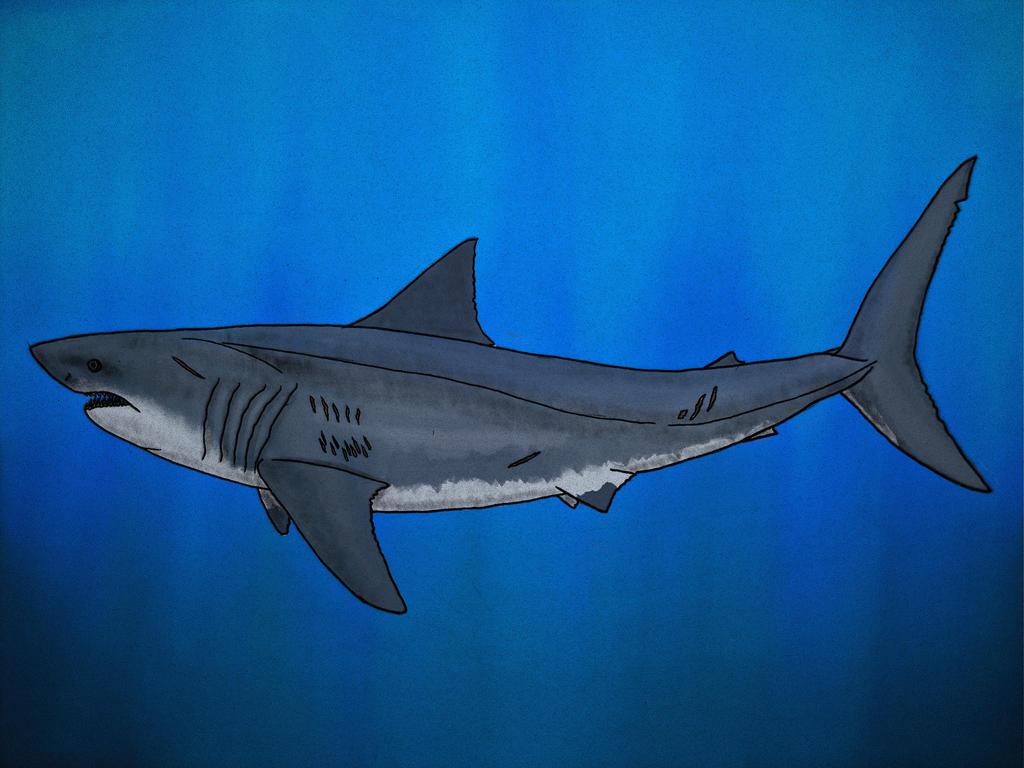 Great White Shark by Saberrex on DeviantArt  Great White Shark Painting