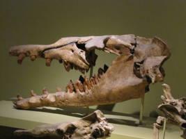 Basilosaurus cetoides by Saberrex