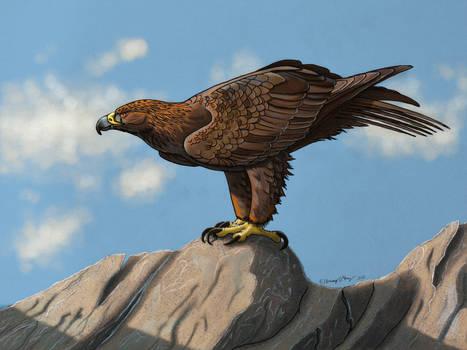 Golden Eagle Perching- Color Version