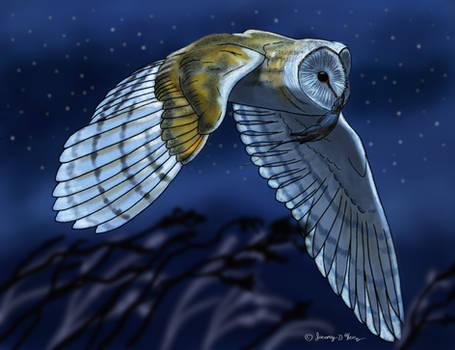 Barn Owl Hunting- Color Version