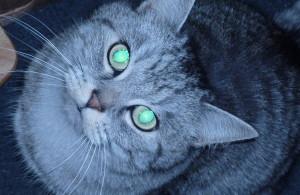 oONebelkralleOo's Profile Picture