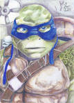 Leonardo by Donachello