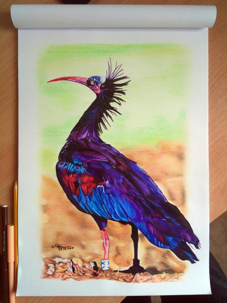 Northern Bald Ibis by GrimShady