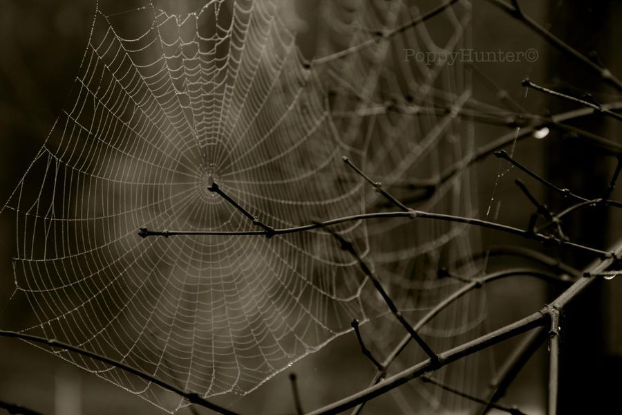 Web morning by PoppyHunter