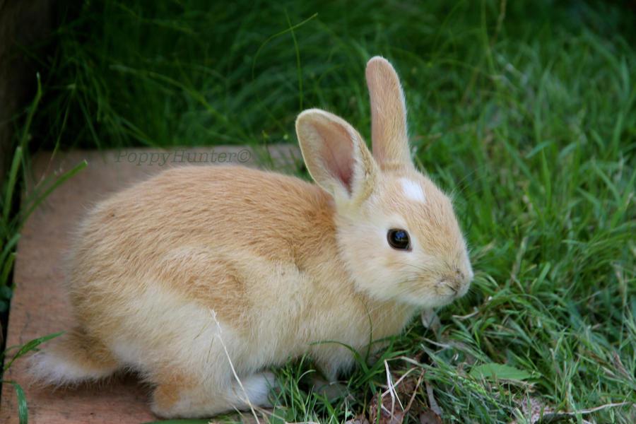 Wild newborn rabbits - photo#9