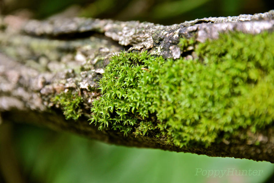 Moss by PoppyHunter