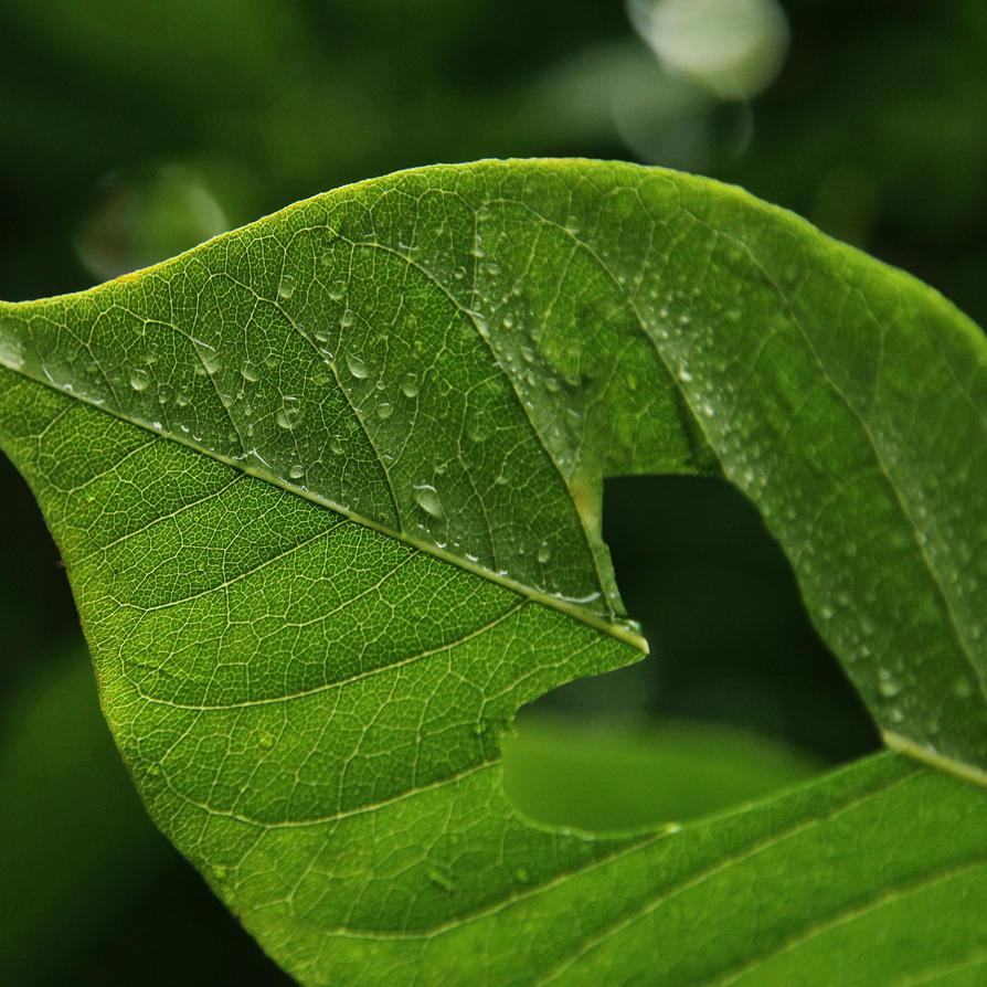 Love leaf by PoppyHunter