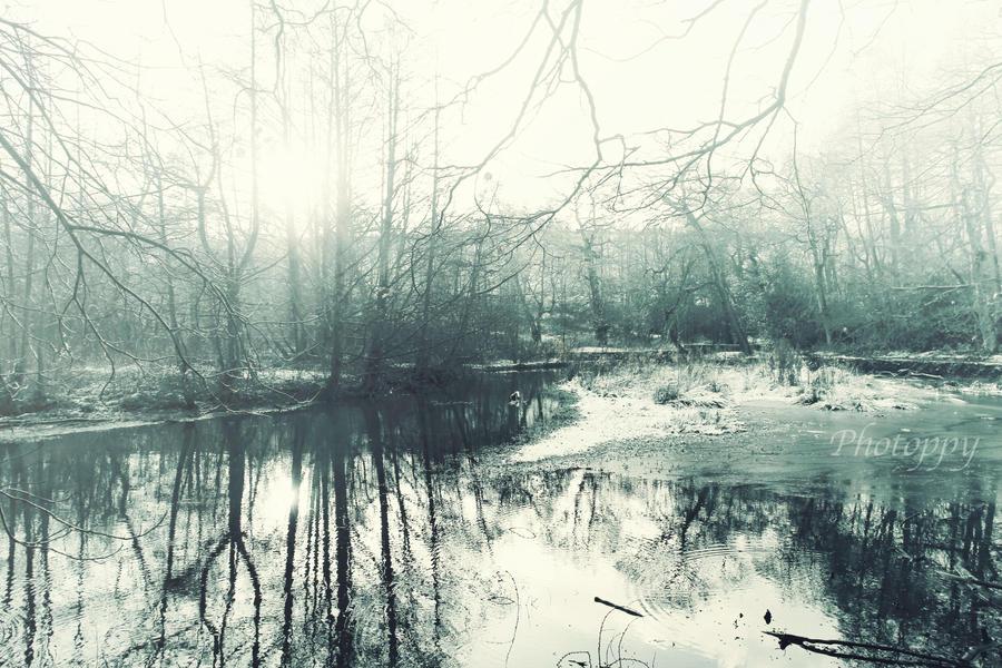Winter's forest stream by PoppyHunter