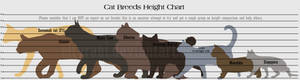 Guide to Cat Breed Heights!