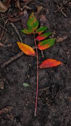 Fall(en)