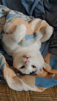 Deceptively happy cat.