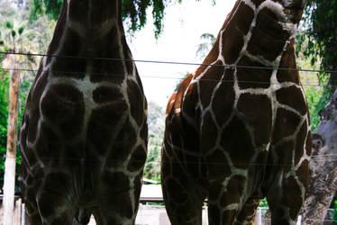 Giraffe Bodies by ash-night-k