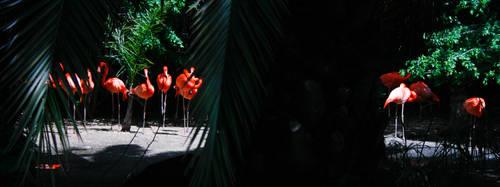 Flamingos by ash-night-k