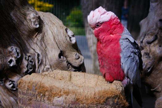 Bird in Pink