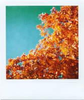 Polaroid - Urban Autumn 3 by LightOfThe80ies