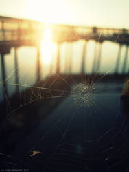 spider by unnatural-disaster
