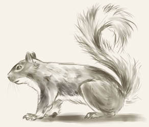 Squirrel Warmup Sketch