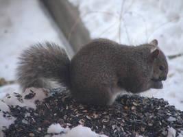 Fuzzy Wisconsin Squirrel by Mistgod
