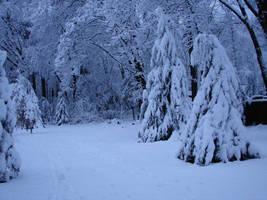 Snow in my Yard 2 by Mistgod