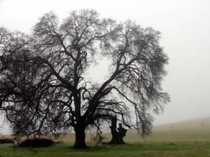 Just a Little Mist by Mistgod