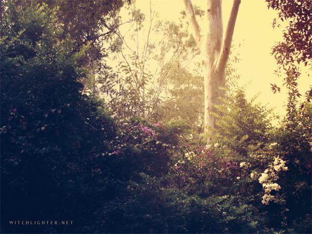 Backyard Snapshot by miss-becky