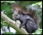 Squirrel by arbitrary