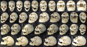 Different Angles of a Skull - Open Mouth
