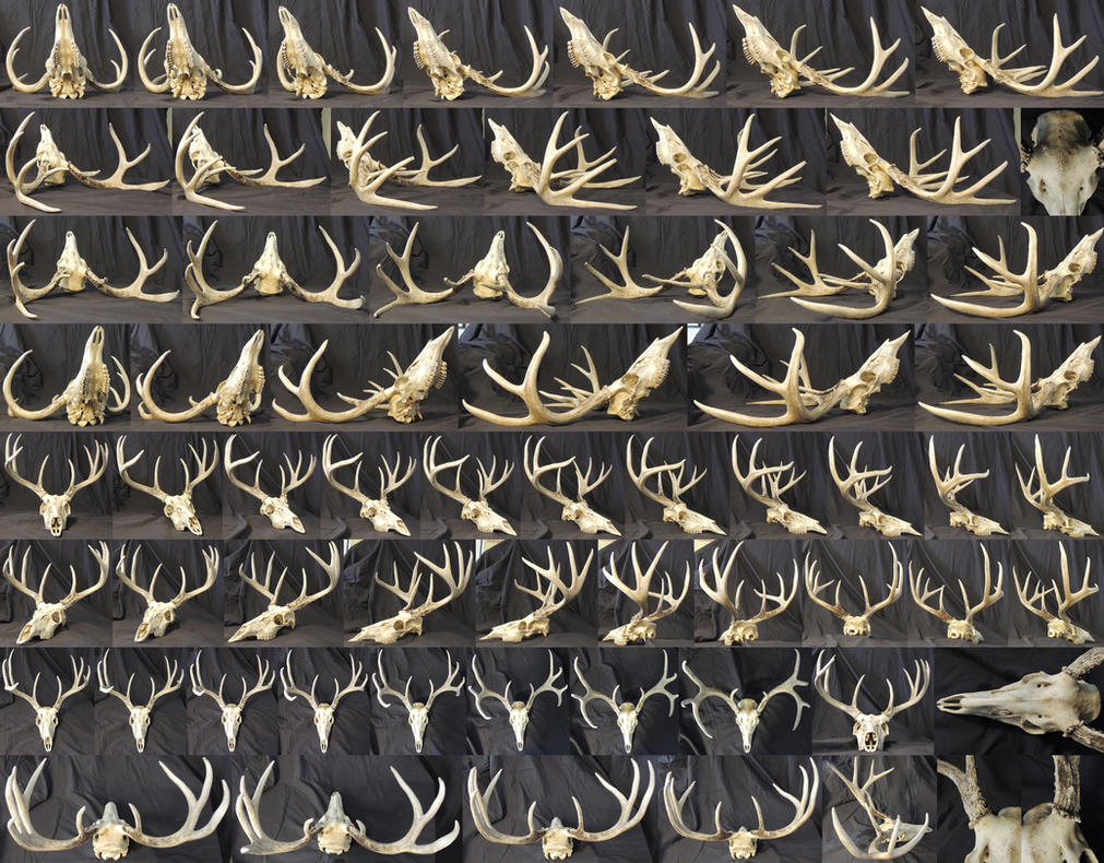 different angles of a deer skull by xeiart on deviantart