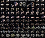 Different Angles of a Skull - Pairs and Poses