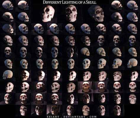 Different Lighting of a Skull