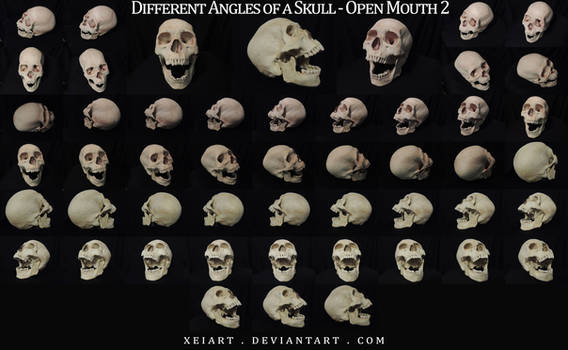 Different Angles of a Skull - Open Mouth REDONE
